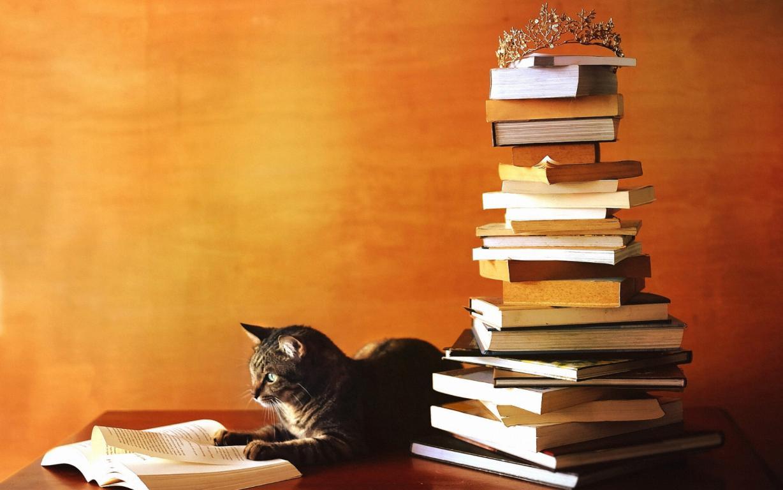 День знаний, 1 сентября, кот ученый, 1920 на 1200 пикселей