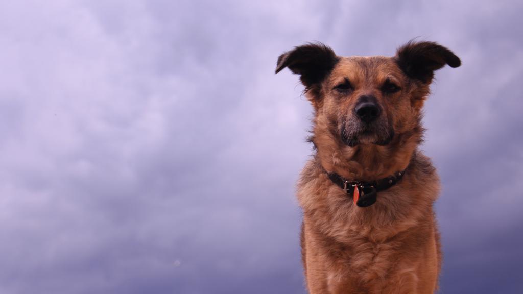 Гордый взгляд пса, обои на телефон андроид собаки, 2560 на 1440 пикселей