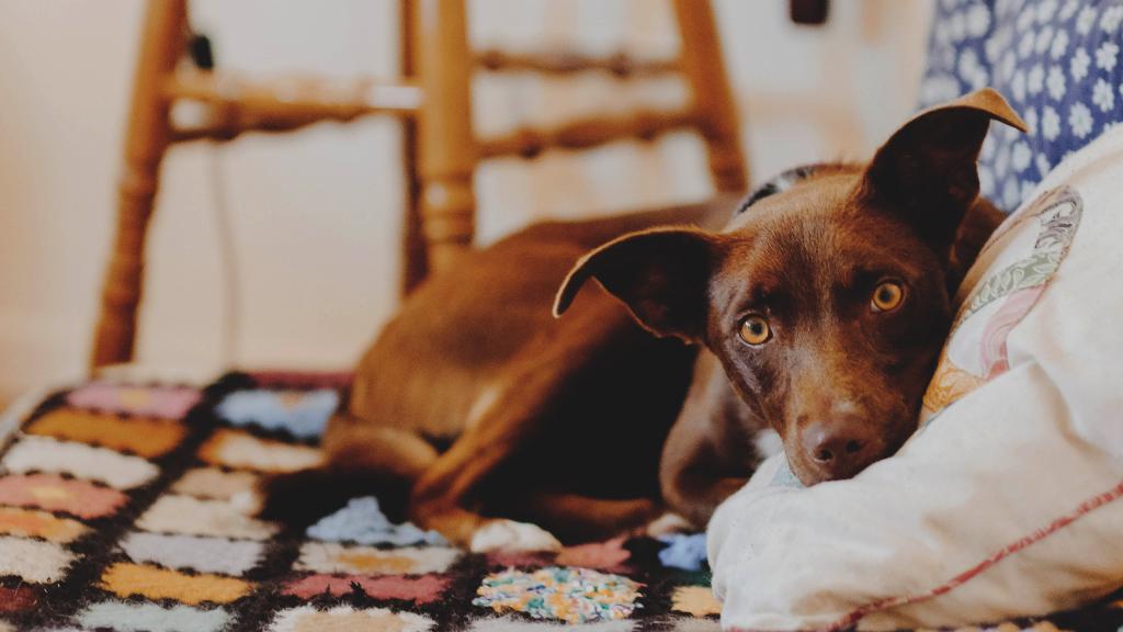 Смешная морда собаки, смешные собаки обои, 2560 на 1440 пикселей