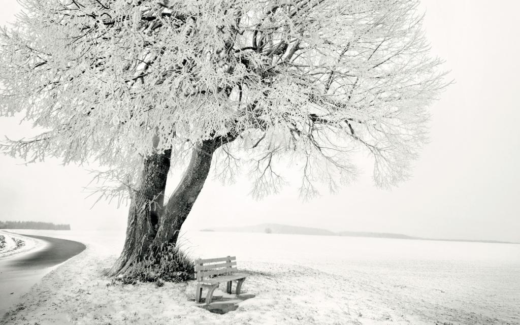 Присыпанное дерево снегом, обои зима снег, 2560 на 1600 пикселей