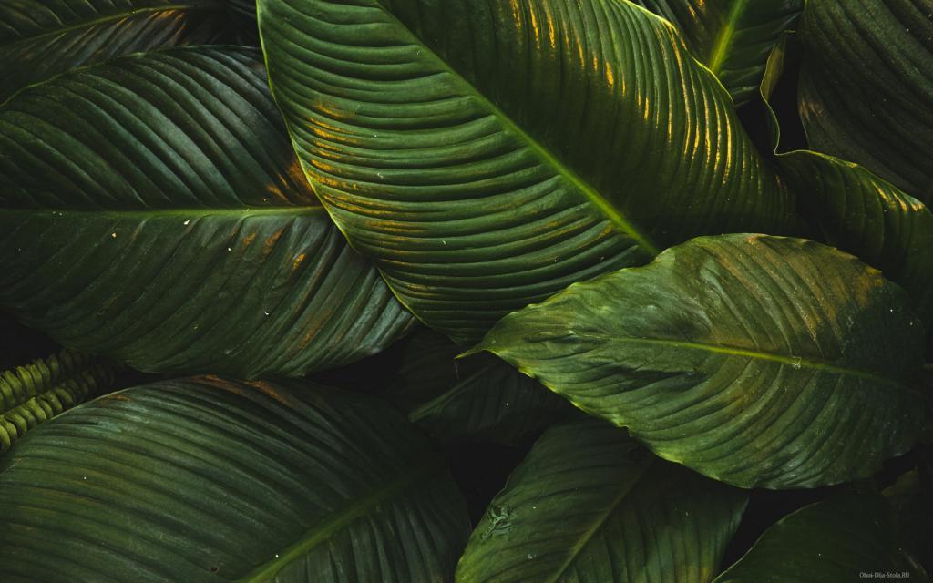 Большие зеленые листья, обои природа смотреть, 2560 на 1600 пикселей